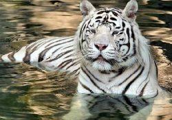 animales en pelìgro de extincion