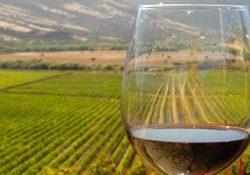 vinos-argentina