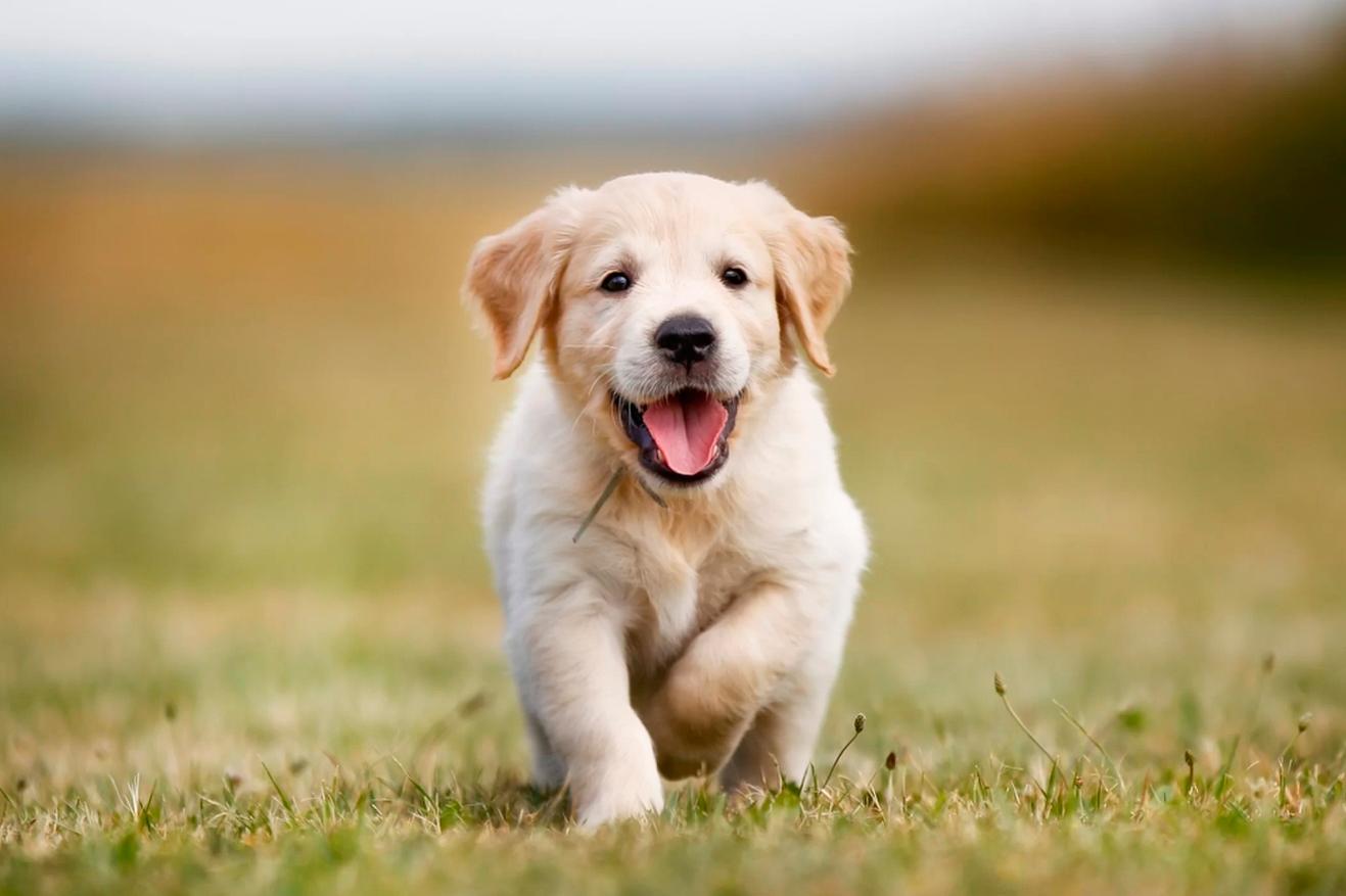 Los cachorros son adorables