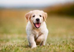 Cachorro adorable